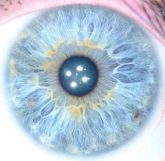 ArtLung's left iris