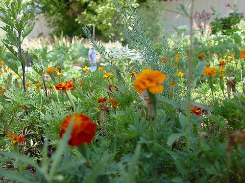 Utah Flowers