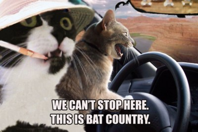 We can't stop here, this is bat country.