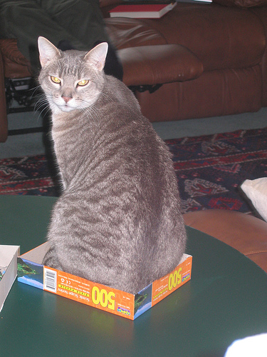 Bas in the Puzzle Box