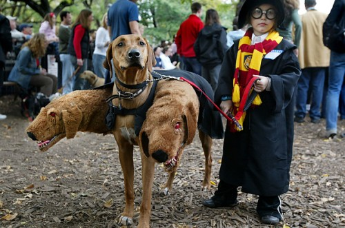 Harry Potter Kid and Dog