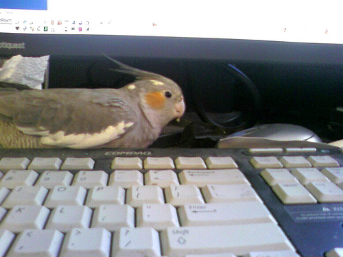 Bird Helps Me Work