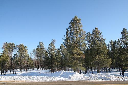 Trail along 89 north of Jacob Lake