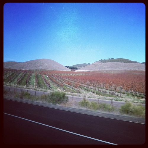 Vineyards in the beautiful Central Coast of Alta California. Viceroyalty of Nueva España