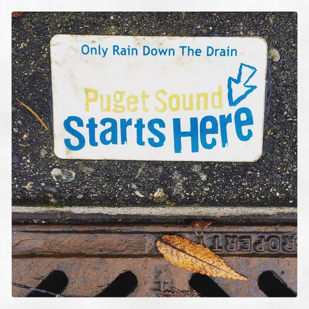 Image result for city of seattle puget sound only rain down the drain