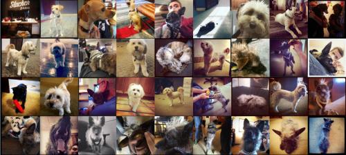2016-09-29-10_22_01-artlung-_-posts-tagged-with-_-dogsofslacker
